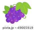 ぶどう 果物 フルーツのイラスト 49665919