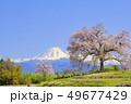 風景 晴れ 桜の写真 49677429
