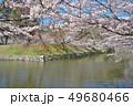 彦根城の桜 49680466