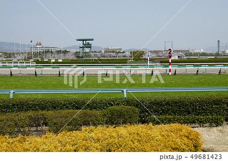阪神競馬場 - 芝コース最後の直線(2) 49681423