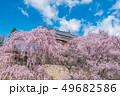 長野県上田市 上田城と桜 49682586