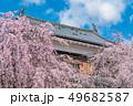 長野県上田市 上田城と桜 49682587