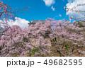 長野県上田市 上田城と桜 49682595