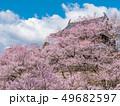 長野県上田市 上田城と桜 49682597