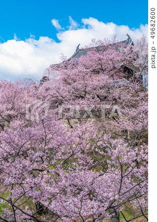 長野県上田市 上田城と桜 49682600