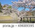 彦根城の桜 49689395