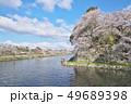 彦根城の桜 49689398