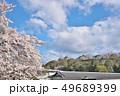 彦根城の桜 49689399