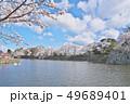 彦根城の桜 49689401