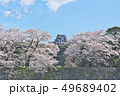 彦根城の桜 49689402