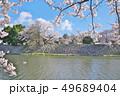 彦根城の桜 49689404