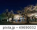 三嶋大社 夜桜 Mishima Taisha Night cherry blossom 49690032