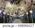 三嶋大社 夜桜 Mishima Taisha Night cherry blossom 49690427