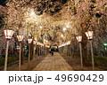 三嶋大社 夜桜 Mishima Taisha Night cherry blossom 49690429