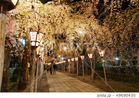 三嶋大社 夜桜 Mishima Taisha Night cherry blossom 49690430