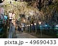 三嶋大社 夜桜 Mishima Taisha Night cherry blossom 49690433