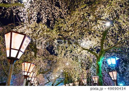 三嶋大社 夜桜 Mishima Taisha Night cherry blossom 49690434