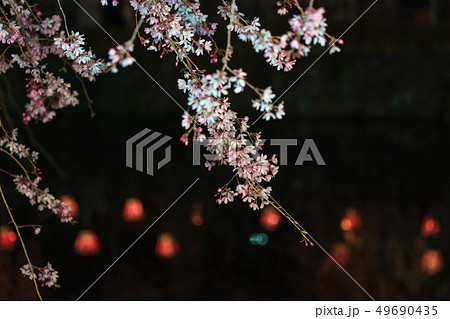 三嶋大社 枝垂れ桜 Mishima Taisha Night cherry blossom 49690435
