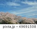 桜並木 コピースペース 49691508