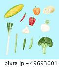 野菜イラスト2 水彩 49693001