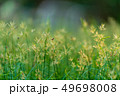 grass flower field nature background 49698008