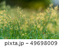 grass flower field nature background 49698009