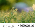 grass flower field nature background 49698010