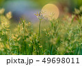 grass flower field nature background 49698011