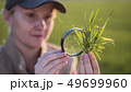 Portrait of a woman agronomist studying wheat shoots through a magnifying glass 49699960