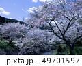 春の小川 49701597