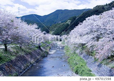 春の小川 49701598