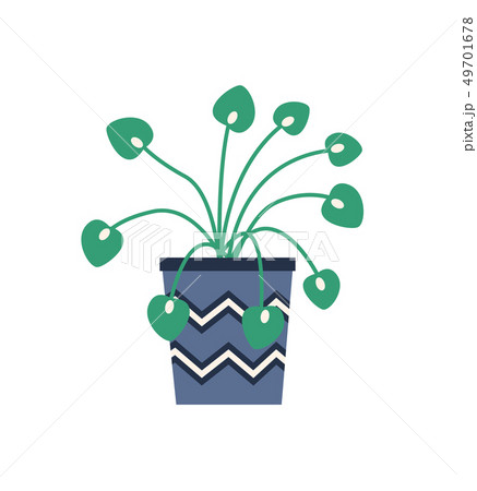 House Plant in Pot With Zig Zag Ornaments Isolated 49701678