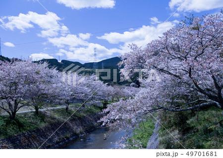 春の小川 49701681