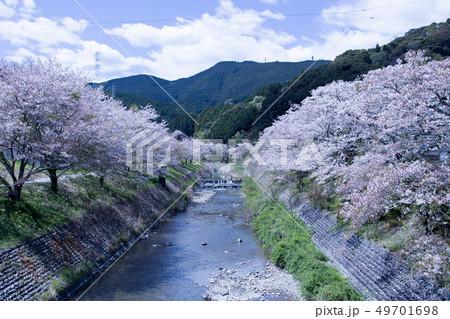 春の小川 49701698