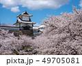 金沢城 石川門と満開の桜 49705081