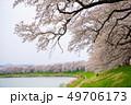桜 一目千本桜 春の写真 49706173