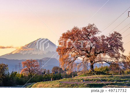 わに塚の桜と富士山 49717732