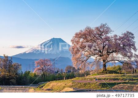 わに塚の桜と富士山 49717735