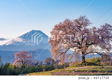 わに塚の桜と富士山 49717736