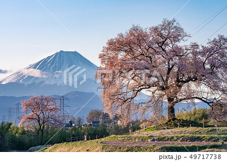 わに塚の桜と富士山 49717738