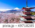 (山梨県)日本の美・桜と雪・新倉山浅間公園から望む富士山 49718285