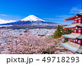 (山梨県)日本の美・桜と雪・新倉山浅間公園から望む富士山 49718293