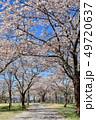 桜 花 春の写真 49720637
