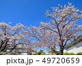 桜 花 春の写真 49720659