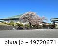 桜 花 春の写真 49720671