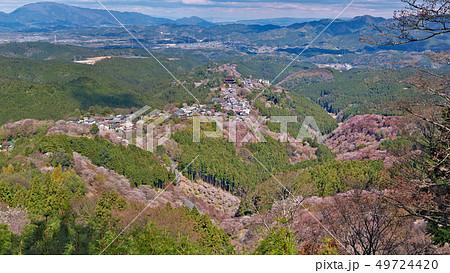 【吉野山の桜】 (高解像度版) 奈良県吉野郡吉野町吉野山 49724420