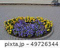 Circle flowerbed with flowers on city pavement 49726344