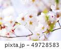 桜 さくら 49728583