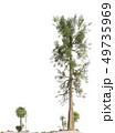 Trees of the mesozoic era isolated on white background 3D illustration 49735969