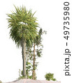 Trees of the mesozoic era isolated on white background 3D illustration 49735980